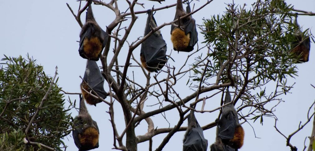 selling a house with bats in the roof